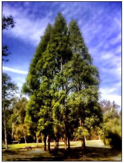 treeatpark