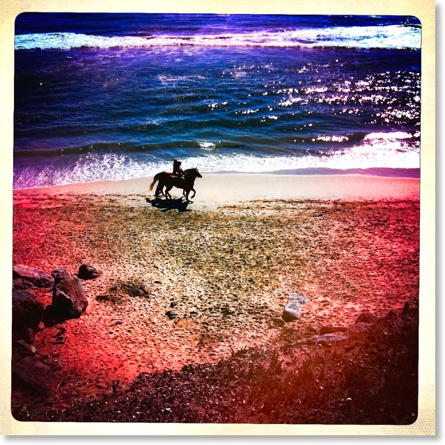 horses-beach2
