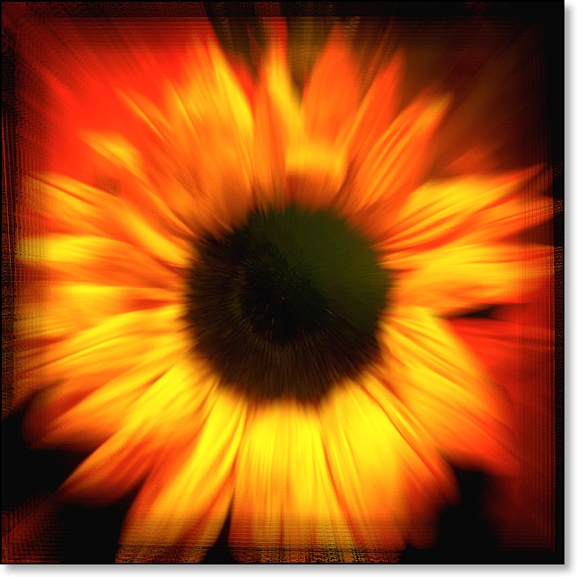 sunflowerzoom